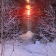 Stock Photo: Winter sunrise