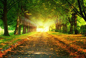 Magic light and walkway in park — Stock Photo