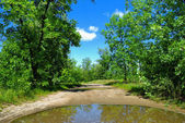 Rain puddle on road and trees — Stock Photo