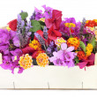 Crate with spring flowers — Stock Photo