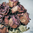 Scary dried flowers — Stock Photo