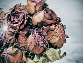 Scary dried flowers — ストック写真