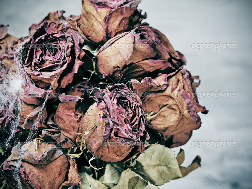 Closeup of a dried roses bouquet with spider web  Stock Photo #6920782
