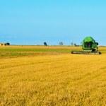 Rice harvesting — Stock Photo