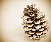 Pine cone on the snow — Stock Photo