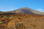 Volcanic landscape in Teide National Park, Tenerife, Canary Isla — Stock Photo
