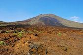 Volcanic landscape in Teide National Park, Tenerife, Canary Isla — Stock Photo