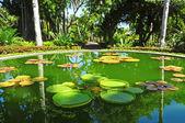 Lago num parque — Foto Stock