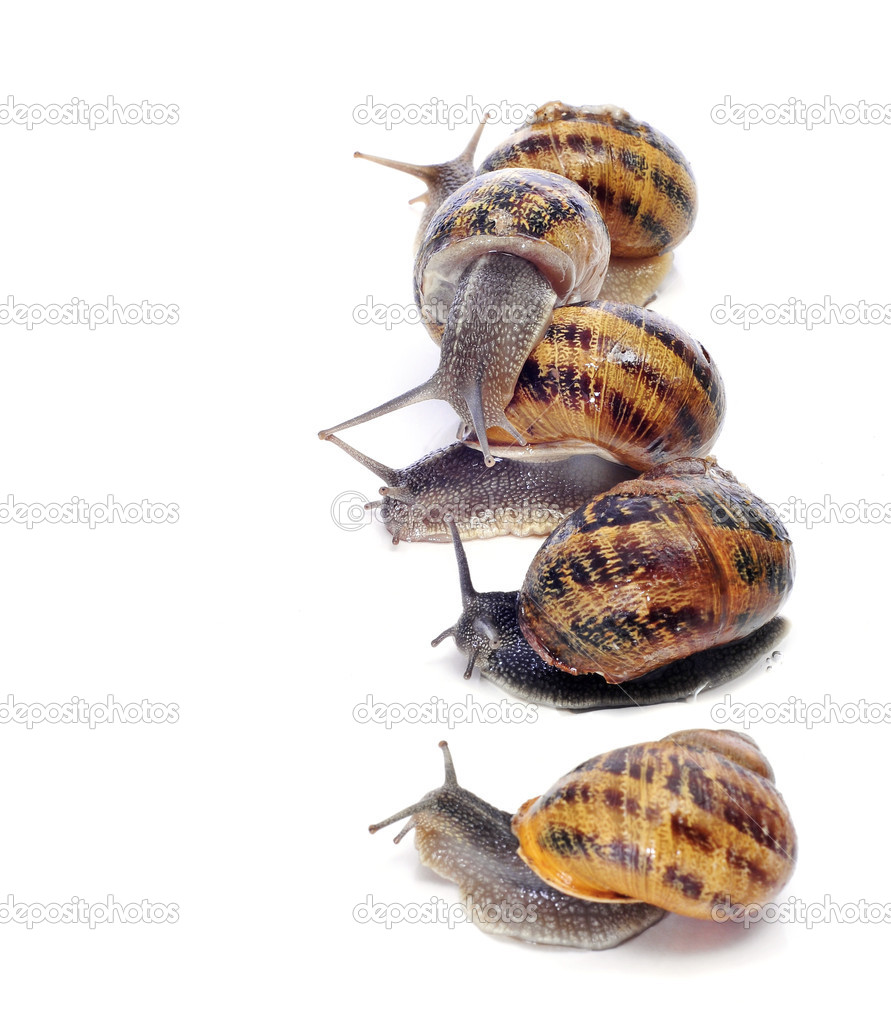 A pile of land snails on a white background — Stock Photo #7091329