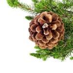Pine cone — Stock Photo #7943944