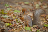 Squirrel _ — Stock Photo