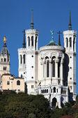 красивые базилика — Стоковое фото