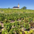 Stock Photo: French vineyads