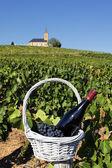 French wine — Stock Photo