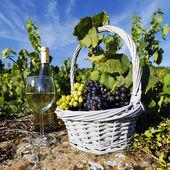Čtvercové bílé víno — Stock fotografie