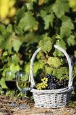 The wine world — Stock Photo
