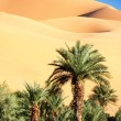 Oasis in desert — Stock Photo