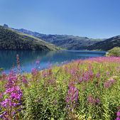 Bloemen en lake square — Stockfoto
