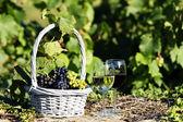 Grape and wine — Stock Photo