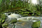 Wild brook — Stock Photo