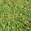 Grass meadow - Foto de Stock  