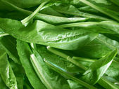 Salad picture — Stockfoto