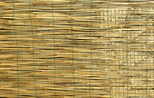 Bamboo background — Foto Stock
