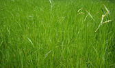 Grass meadow — Stock Photo