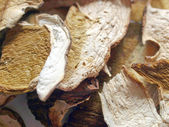 Mushrooms picture — Stock Photo