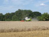 Harvest — Foto de Stock
