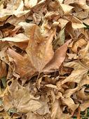 Falling leaves — Stock Photo