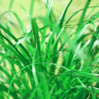 Grass meadow weed — Stock Photo #7441383