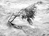 Lonely tree resisting flood — Stock Photo
