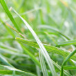 Grass meadow weed — Stock Photo #7456933