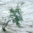 Stock Photo: Lonely tree resisting flood