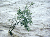 Lonely tree resisting flood — Stock Photo