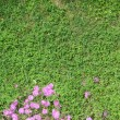 Grass meadow with flowers — Stock Photo