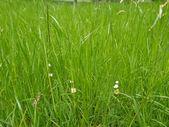 Gras weide — Stockfoto