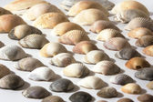 Shells — Stock fotografie