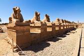 Sfinksy udał się do pamięci ram — Zdjęcie stockowe