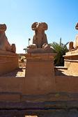 Ram-headed sphinx — Stock Photo
