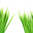 Wet green grass, isolated on white backg — Stock Photo