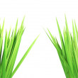 Two bunches of a wet green grass — Stock Photo
