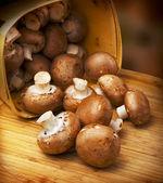 Champignon mushroom, brown variety — Stock Photo