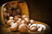Champignon mushrooms with brown variety — Stock Photo