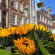 House architecture in Amsterdam over yellow sunflower — Stock Photo #7382515