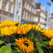 House architecture in Amsterdam over yellow sunflower — Stock Photo #7382530