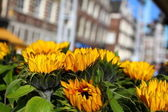 Typical Amsterdam houses over blue sky and yellow sunflower — Stock Photo