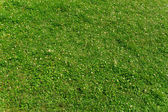 Green floral lawn — Stock Photo