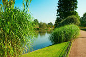 Beautiful park pond — Stock Photo